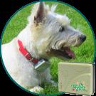 Compact Waterproof Dog GPS Tracker TY013